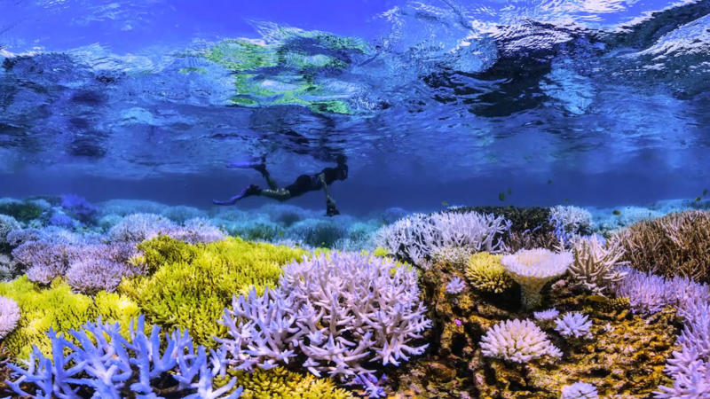 Saving our reefs