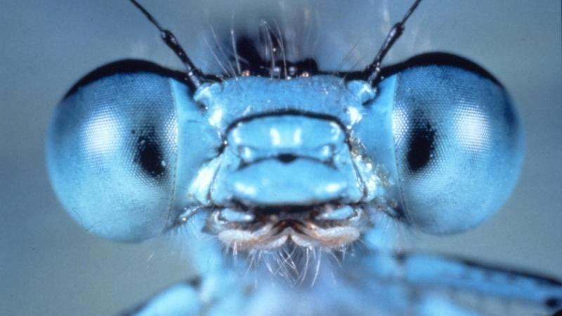 Up Close and Personal with Insects
