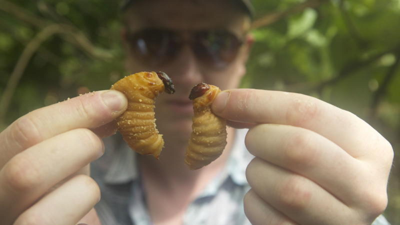 Entomophagy and insect cuisine