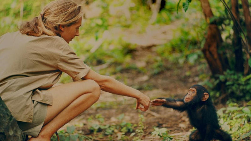 The research of Jane Goodall